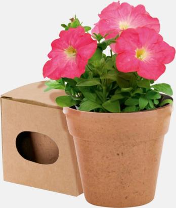 Natur Blomkruka och frön - med reklamtryck