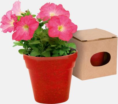 Blomkruka och frön - med reklamtryck