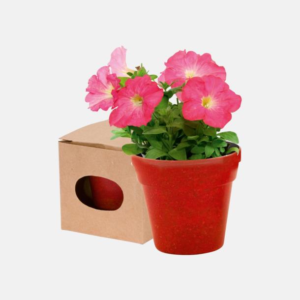 Röd Blomkruka och frön - med reklamtryck